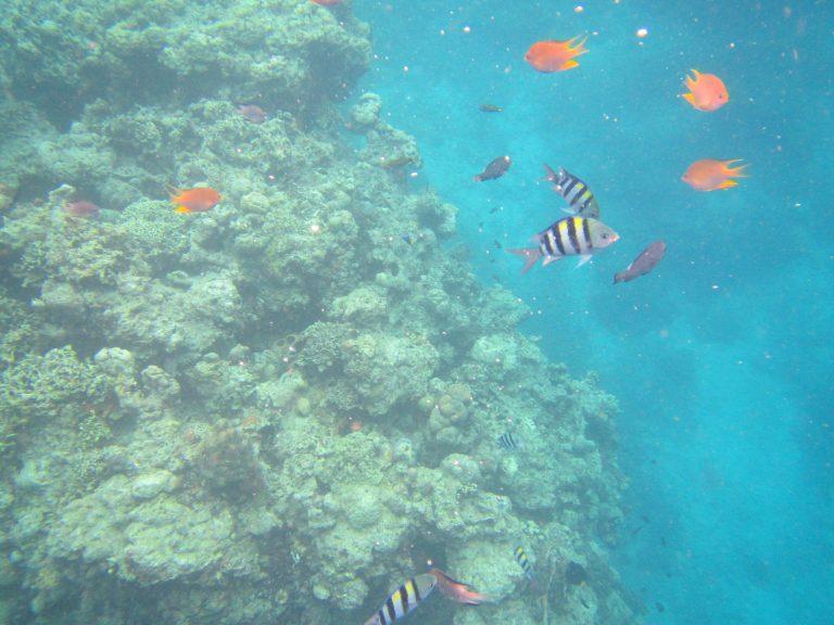 Coral Reef Thalia Tour