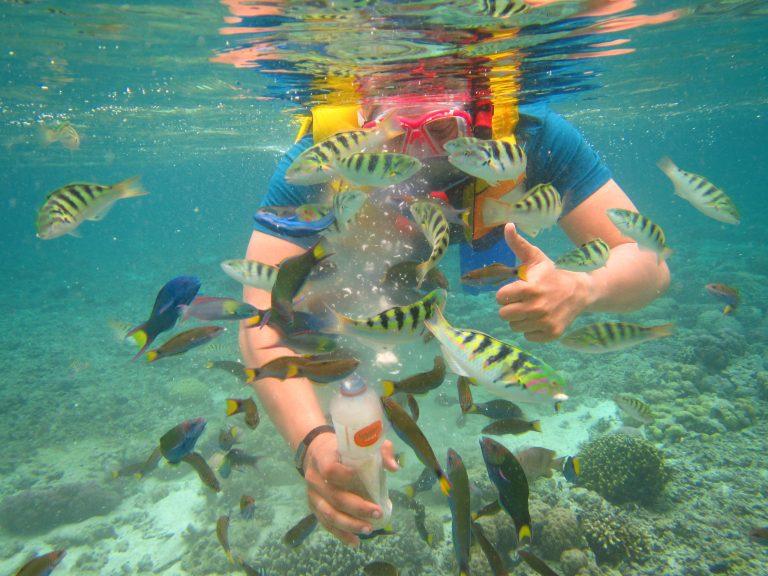 A Lot of FISH Thalia Tour Travel